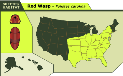 RESCUE BugBlog - Wasps us map
