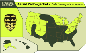 Aerial_yellowjacket