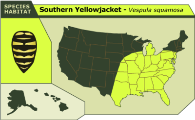 Southern_yellowjacket