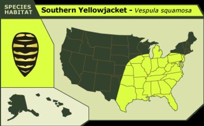 Southern_yellowjacket