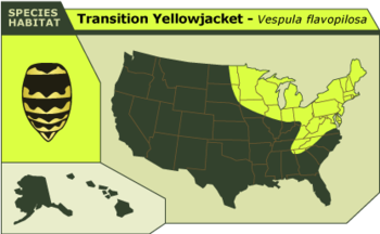 Transition_yellowjacket