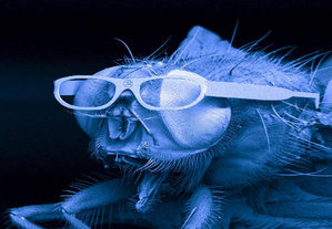 060328_fly_glasses_big