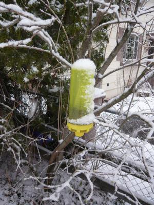 Yj_trap_in_snow