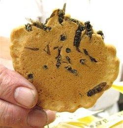 Wasp_cracker