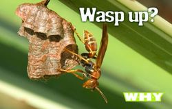 Wasp_up_postcard