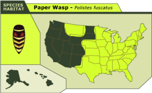 Paperwasp_3