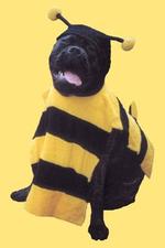Beedog_1