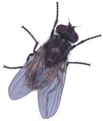 Fly_5