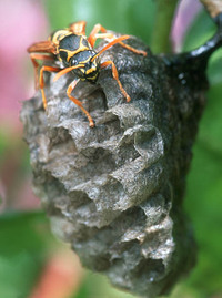 Paper20wasp_2